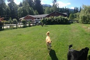 doggy day care in whistler, canada